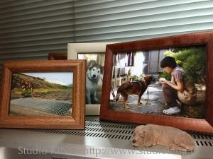 先代の犬(ハナ)とクロの写真が占領しています。